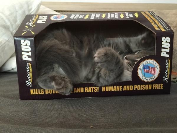Kills both mice and rats