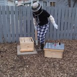 Setting up the Beehive