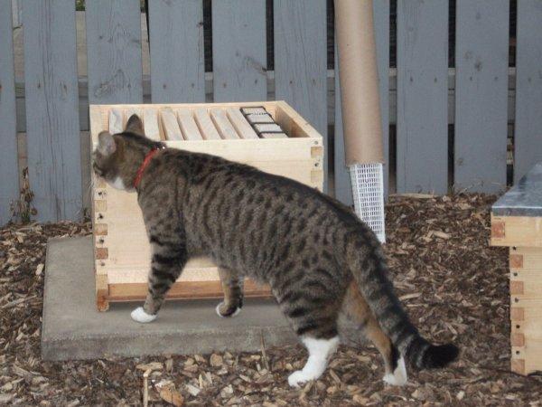 Garden Cat Vera