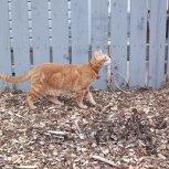 Garden Cat Peter
