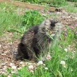 RIP Garden Cat Wicket